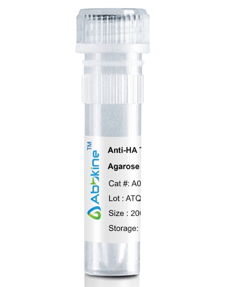 Fig. Anti-HA Tag Mouse Monoclonal Antibody, Agarose are convenient for the immunoprecipitation (IP) of recombinant HA tagged proteins.