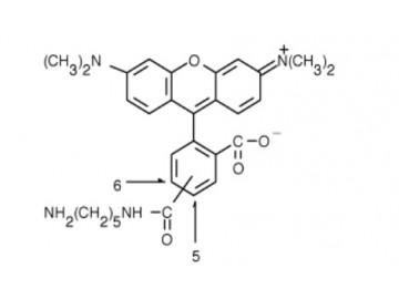 Fig. 5(6)-TAMRA, cadaverine structure formula