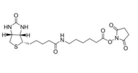 Fig. Biotin-X SE structure formula