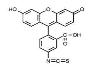 Fig. FITC (ISOMER I) structure formula