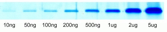 Fig. Various volumes of BSA samples were separated on 10% SDS-PAGE, stained with protein gel flash staining working solution for 30 minutes.