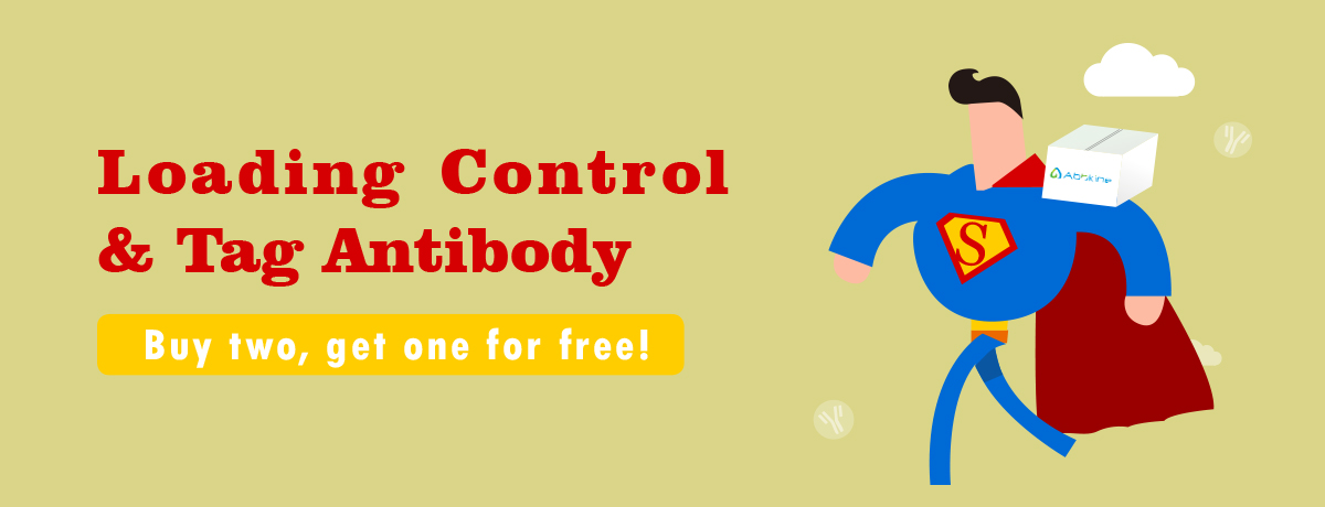 Loading Control & Tag Antibody-Buy two get one for free