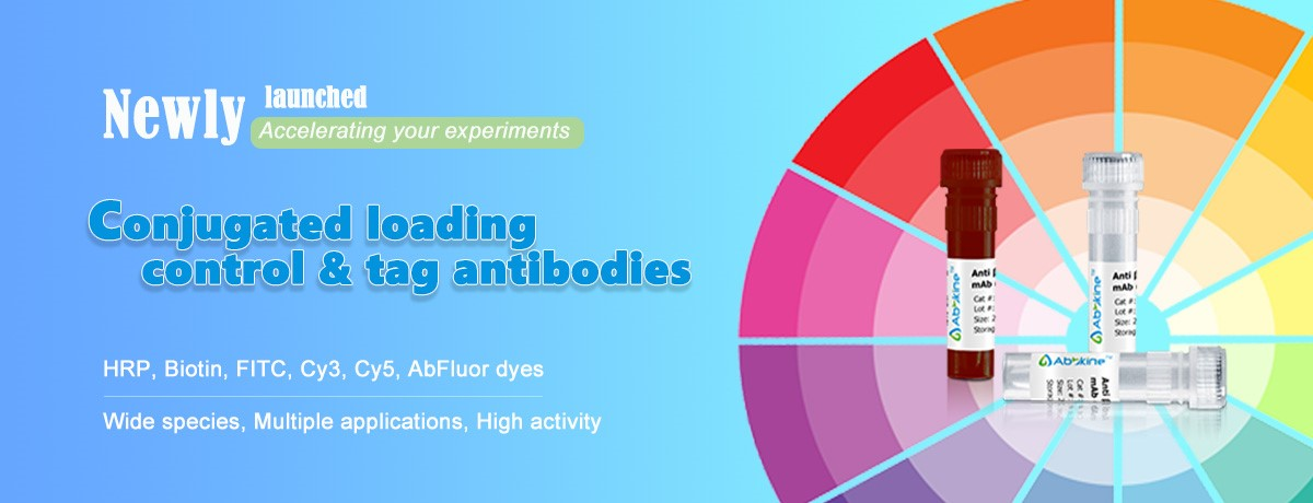 Abbkine Scientific Newly Launched Conjugated Loading Control & Tag antibodies