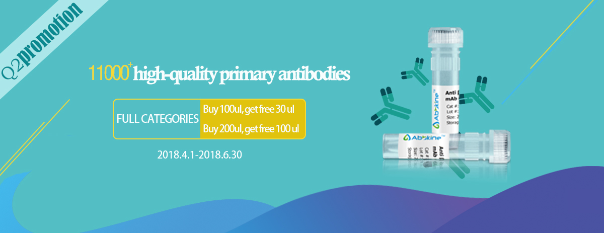 Primary antibodies promotion