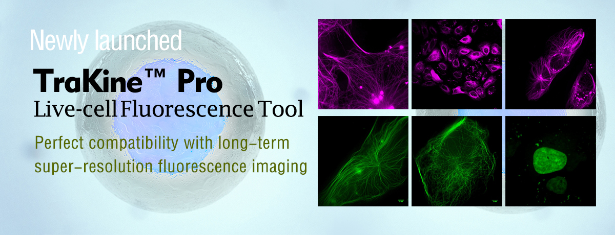 TraKine™ Pro is series of long-term super-resolution cell staining imaging portfolio for labeling subcellular structures of live and fixed cells.