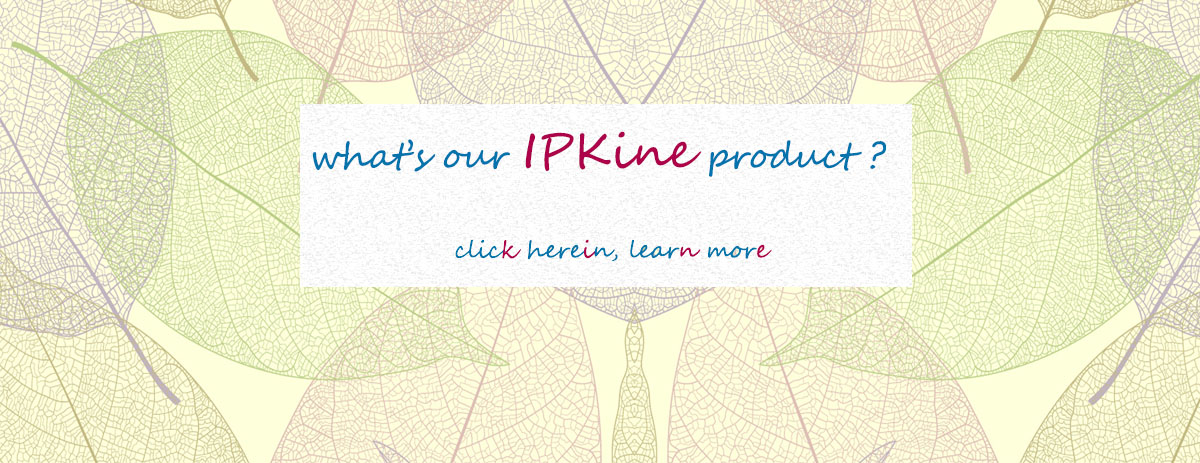 IPKine™ antibody for for your IP assay!