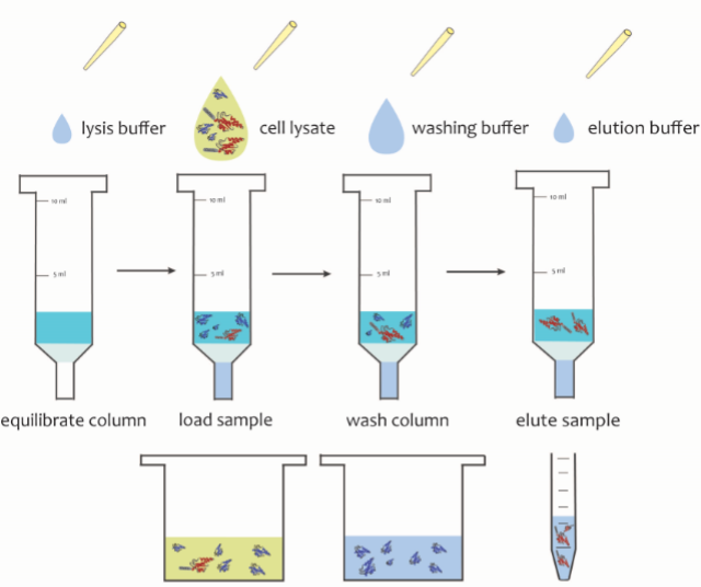 protein-purification