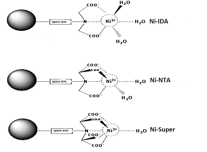 Structure of Ni-IDA, Ni-NTA and Ni-Super
