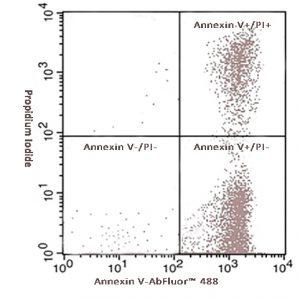 Annexin V-AbFluor™ 488 细胞凋亡检测试剂盒
