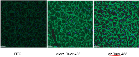 This is picture of AbFluor 488 fluorescence performance compared with Alexa Fluor 488 & FITC