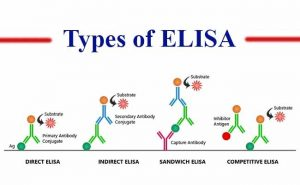 types of ELISA