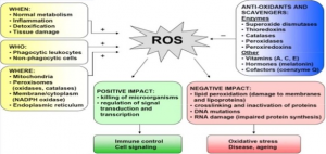 Overview of ROS and Oxidative Stress