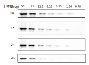 Superkine ™ Ultra Sensitive ECL Luminescence (Flyker Grade, BMU102-CN) Signal Stability and Durability Verification Data