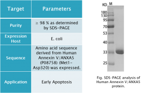 Annexin V-ANXA5 product info