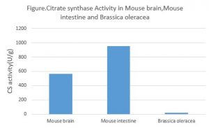 Citrate Synthase CS